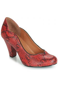 Chaussures escarpins Cristofoli SNAKE MESTICO(98463295)